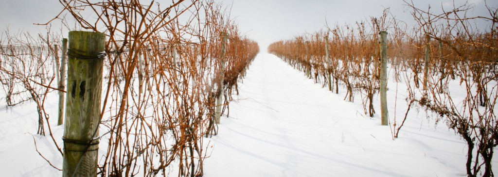 Vineyard at Swedish Hill Winery where some of the coldest temperatures have been captured
