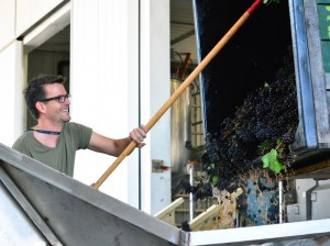 Zach-Raking-Pinot-Noir